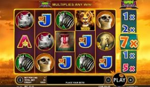 Hot Safari slot screenshot 313